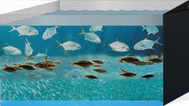 aquarium3WithBase