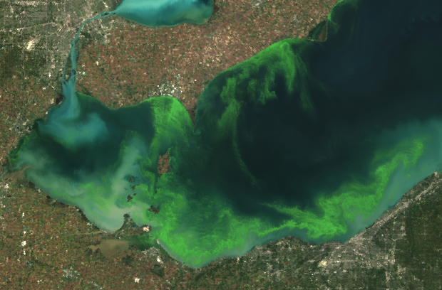 A satellite image shows the Lake Erie algae bloom in 2011 to be the most severe in decades. (Credit: MERIS/NASA)