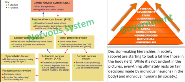 Society has evolved with multiple levels of decision-making, reaching from families and individuals at the grassroots level, all the way up to national governments. Information flows up and down the hierarchy. (Images from fcemhs.com / CitizenPreparedness... and... wikipedia.org / Nervous System)